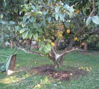 giardino (15)