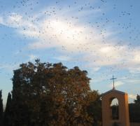stormi di uccelli 4