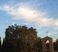 stormi uccelli 6