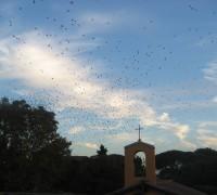 stormi uccelli 7
