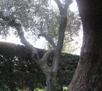 roma2013 e valledacqua 070